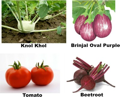 Easy Gardening Knol khol, Brinjal oval purple, Tomato, Beetroot F1 Hybrid Seed