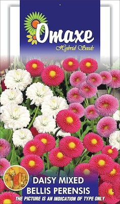 Omaxe DAISY BELLIS MIXED WINTER FLOWER 50 SEEDS PACK BY OMAXE Seed