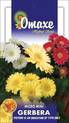 Omaxe GERBERA MICRO MINI WINTER FLOWER 50 SEEDS PACK BY OMAXE Seed