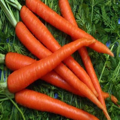 Biocarve Carrot Nantes Seed