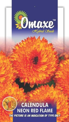 Omaxe CALENDULA FLAME WINTER FLOWER 50 SEEDS PACK BY OMAXE Seed