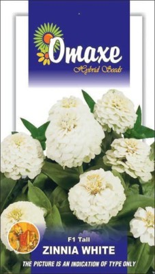 Omaxe ZINNIA F1 TALL WHITE SUMMER FLOWER SEEDS-AVG 40/50+ SEEDS BY OMAXE Seed