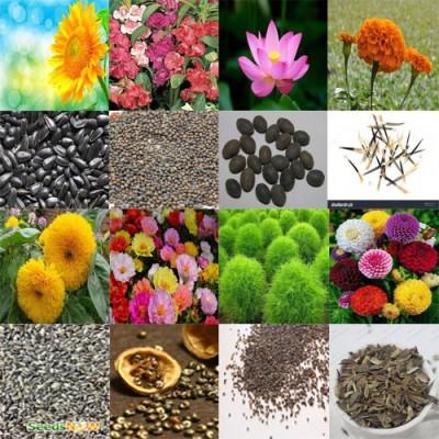 Alkarty sunflower,balsam,lotus,marigold,sungold.portulaca,kochia and zinnia seed Seed