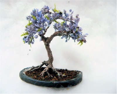 Saaheli Jacaranda Mimosifolia Blue Bonsai Tree Seed(10 per packet)