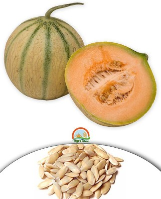 Agro Max Musk Melon Export Quality Fruit Seed