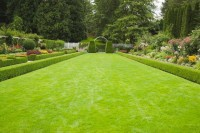 Nelesa Gardening Lawn Grass 10000 Seed(10000 Per Packet)