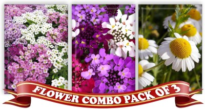 Real Seed Flower Combo Pack - Alyssum, Candytuff, Babuna White F1 Hybrid Seed