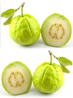 Real Seed Indian Guava (Amrood) Hybrid Imported Fruit Seed(50 per packet)