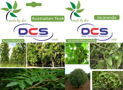 DCS Australian Teak & Jacaranda (2 Packet of Seeds) Seed
