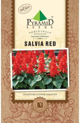 PYRAMID SEEDS Salvia Red Seed