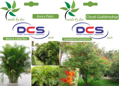 DCS Areca Palm & Choti Goldmohar (2 Packet of Seeds) Seed