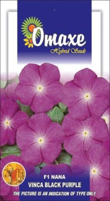 Omaxe VINCA F1 NANA BLACK PURPLE SUMMER FLOWER SEEDS-AVG 20/30+ SEEDS BY OMAXE Seed