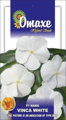 Omaxe VINCA F1 NANA WHITE SUMMER FLOWER SEEDS-AVG 20/30+ SEEDS BY OMAXE Seed