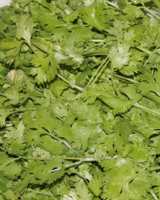 Indous Agriseeds Indo Us Coriander seeds per. 500 gm Seed