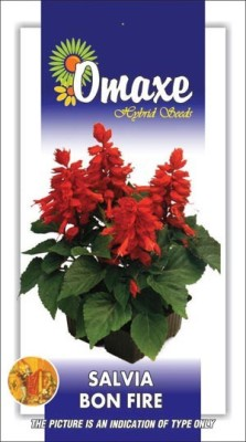 Omaxe SALVIA BON FIRE RED 50 SEEDS PACK BY OMAXE Seed