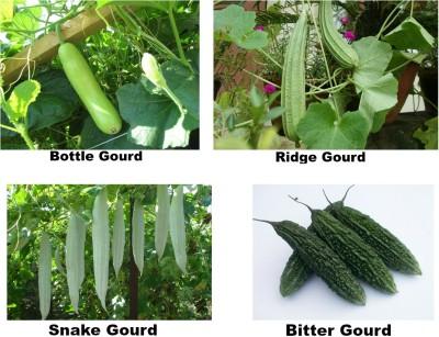 Easy Gardening Bottle Gourd, Ridge Gourd, Bitter Gourd, Snake Gourd F1 Hybrid Seed