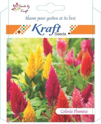 Kraft Seeds Celosia Plumosa Seed