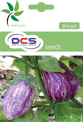 DCS Purple Round Brinjal CVK Seeds (pack of 50) Seed
