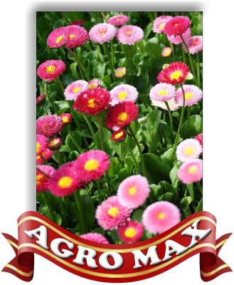 Agro Max DAISY CARPET MIX Seed