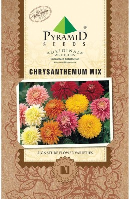 PYRAMID SEEDS Chrysanthemum Mix Seed