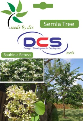 DCS Semal Forest Plant(10 Seeds Per Pack) Seed