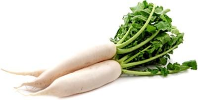 E-Plant Vegetable Seed