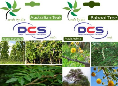 DCS Australian Teak & Babool Tree (2 Packet of seeds) Seed