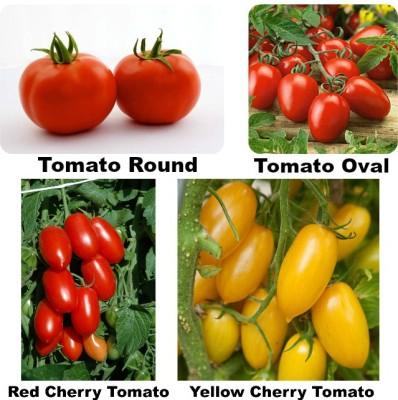 Easy Gardening Exotic Tomato Round, Oval, Cheery Red, Cherry Yellow F1 Hybrid Seed