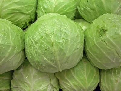 Biocarve Cabbage Golden Acre Seed