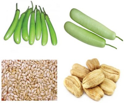 Alkarty Green brinjal and bottle gourd seeds Seed