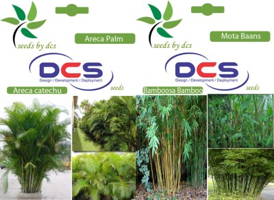 DCS Areca Palm & Mota Baans (2 Packets of Seeds) Seed