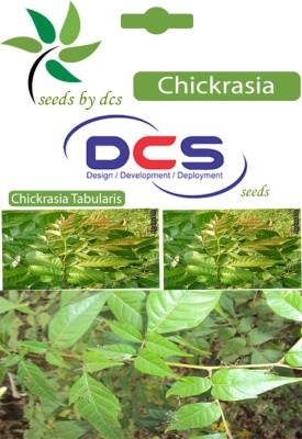 DCS Chickrasia Forest Plant (10 Seeds Per Pack) Seed