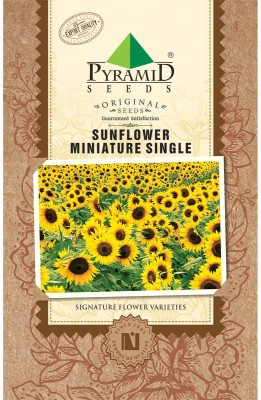 PYRAMID SEEDS Sunflower Miniature Single Seed