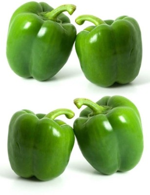 Real Seed Green Capsicum F1 Hybrid Seed