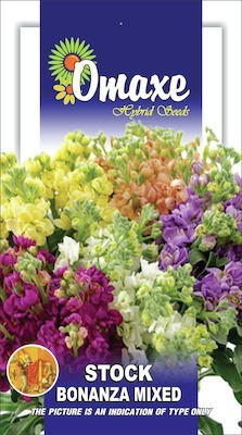 Omaxe STOCK BONANZA MIXED WINTER FLOWER 50 SEEDS PACK BY OMAXE Seed