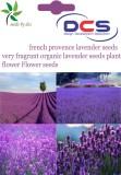 DCS French Provence Lavender seeds Fragr...