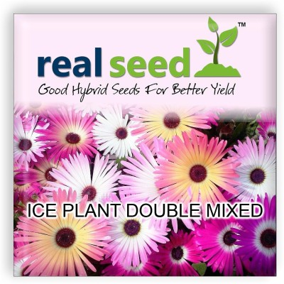 Real Seed Ice Plant Double Mixed Hybrid Imported Flower Seed