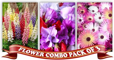 Real Seed Flower Combo Pack - Lupins Mixed, Sweet Pea, Ice Plant Double Mixed F1 Hybrid Seed