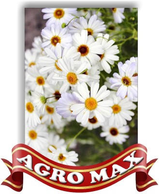 AGRO MAX BRYCHECOME MIXED Seed