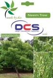 DCS Neem Forest Plant (10 Seeds Per Pack...