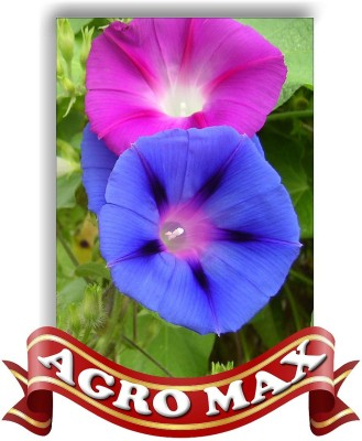 Agro Max MORNING GLORY [IPOMEA] MIXED Seed