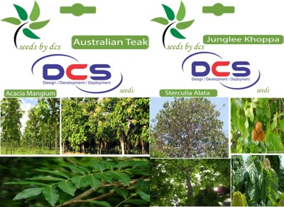 DCS Australian Teak & Junglee Khoppa (2 Packets of seeds) Seed