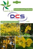 DCS Goldmohar (Yellow)Forest Plant (10 S...