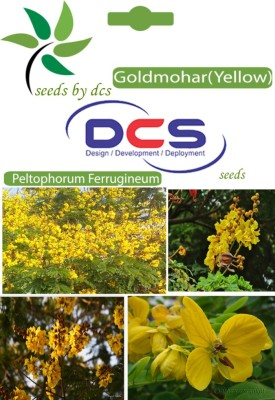 DCS Goldmohar (Yellow)Forest Plant (10 Seeds Per Pack) Seed