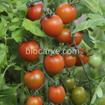 Biocarve PanAm Tomato Seed