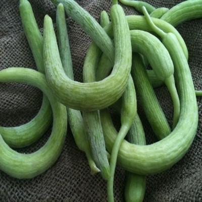 Biocarve Long Melon Seed