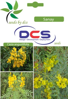 DCS Sanay Forest Plant(5g seeds Per Pack) Seed