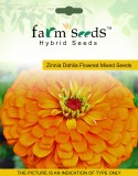 FARM SEEDS Zinnia Dahlia Flowred 2 Packe...