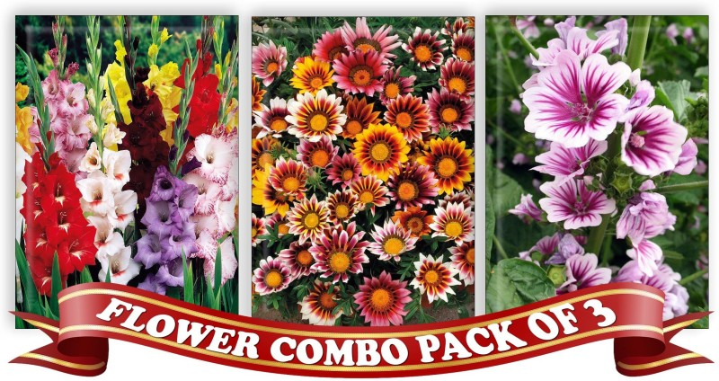 Real Seed Flower Combo Pack - Larkspur Mixed, Gazania Mixed, Holyhock Malwa F1 Hybrid Seeds Seed(3 per packet)