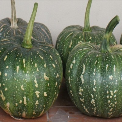 Biocarve Pumpkin Seed